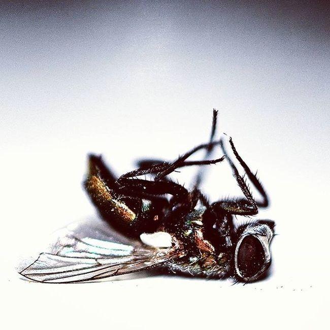Lead_me_to_oblivion Death Macro Closeup Photography Nikon Morbid Fly Bug Instect Wings Rip
