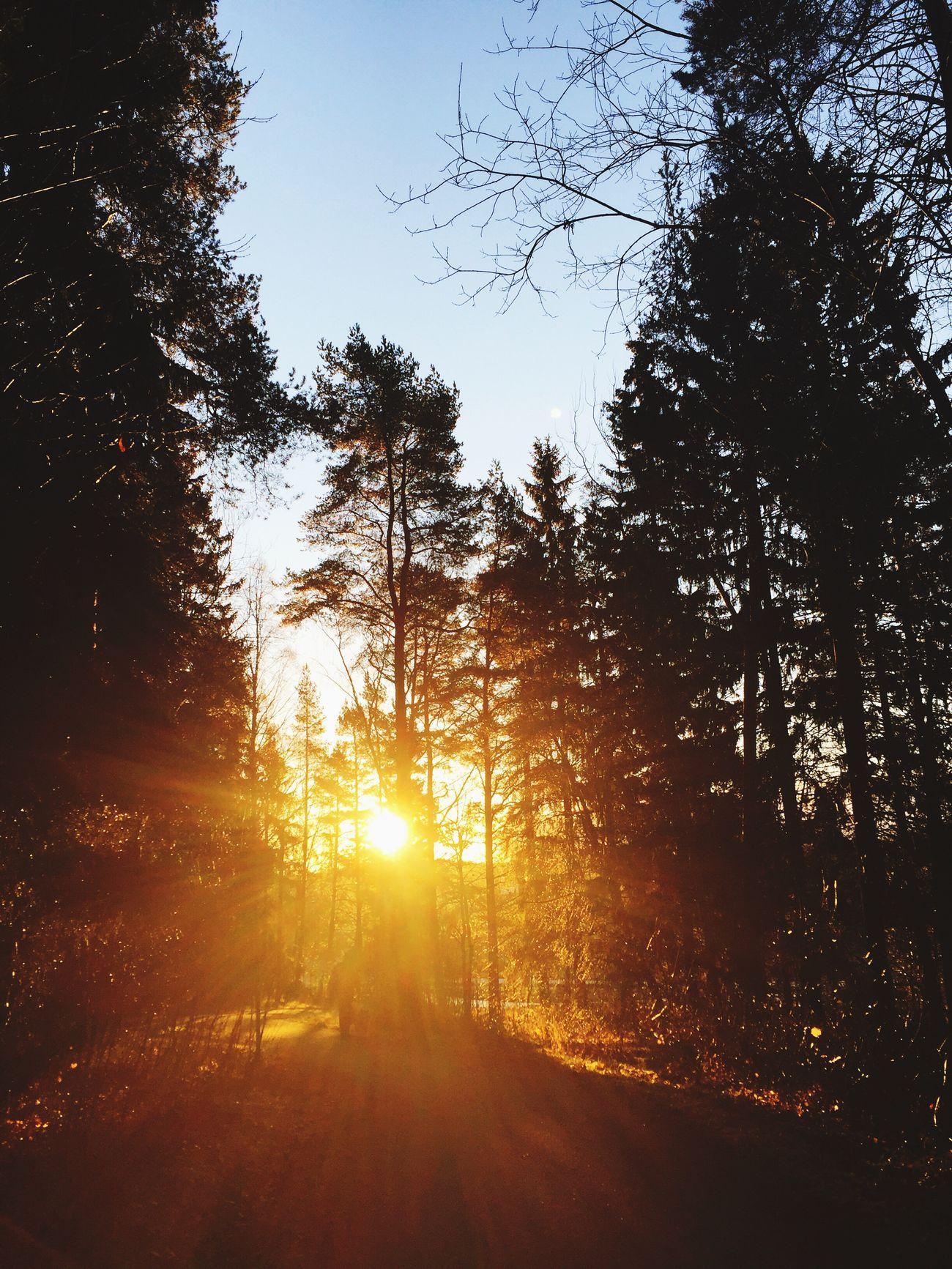 Morning Sunlight Dog Walker Morning Sun Nature Forest Light Turku In Finland Autumn