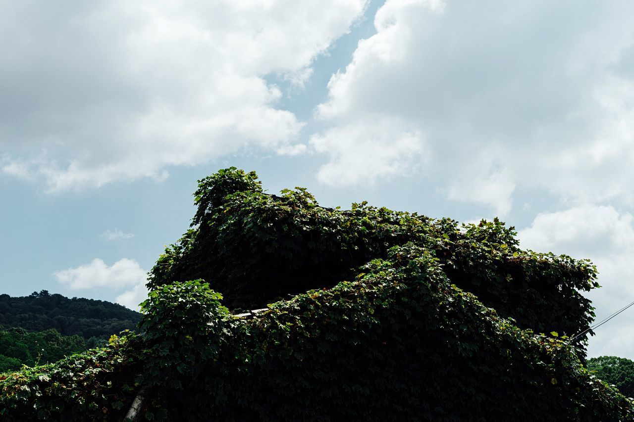Green Covered Old House Summer Sky  Cloud Green Growth Hot Day Summer Clouds Clouds And Sky Nara Nara,Japan Atomosphere Travel Alone Time Japanese House Green Roof Summer Sky And Clouds
