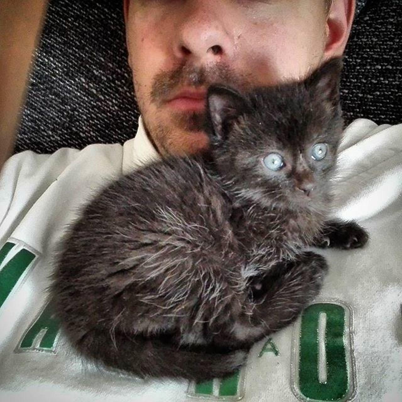 Das ist Pacman , unser neuer Mitbewohner. Cat