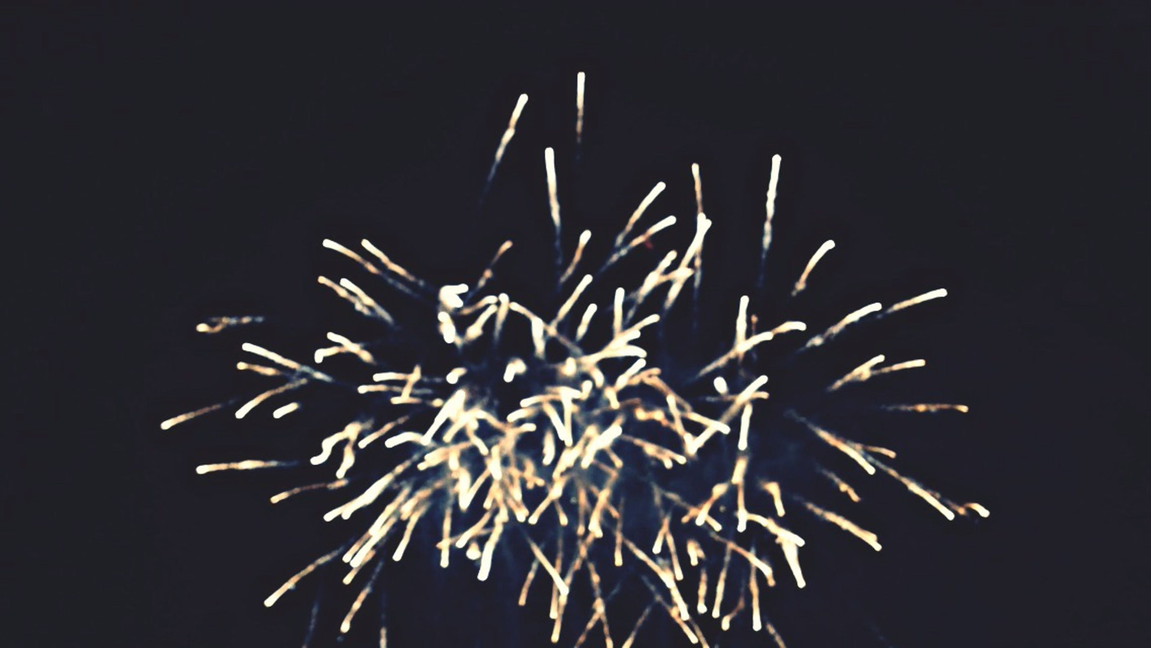 night, studio shot, black background, celebration, low angle view, close-up, no people, copy space, illuminated, firework display, glowing, exploding, outdoors, arts culture and entertainment, dark, sky, clear sky, flower, growth, nature