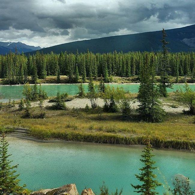 Driving through beautiful Jasper national park. Helloalberta Rockies Alberta Canada Imagesofcanada Rivers Natgeolandscape Natgeo Samsungnote4 Roadtrip Throughanewlenscontest Travelabout