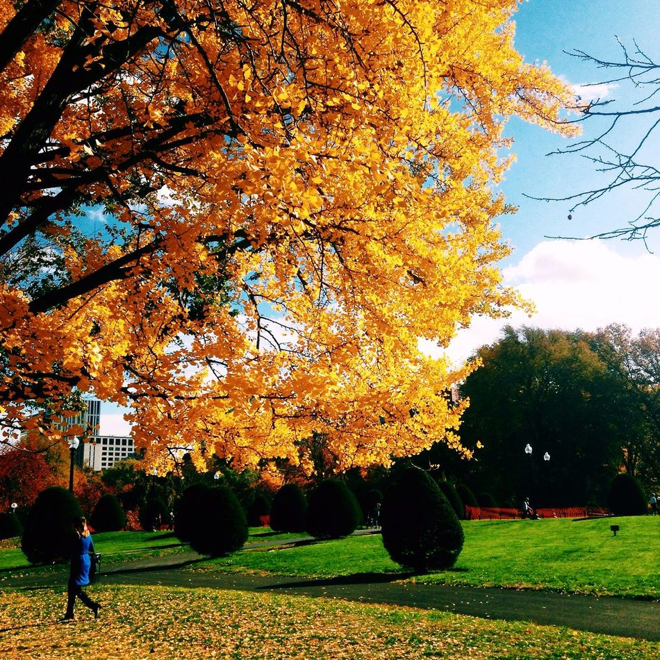 Autumn Outdoors Bostonpublicgarden Water Cityscape Development City Leisure Activity Trees cities Newengland