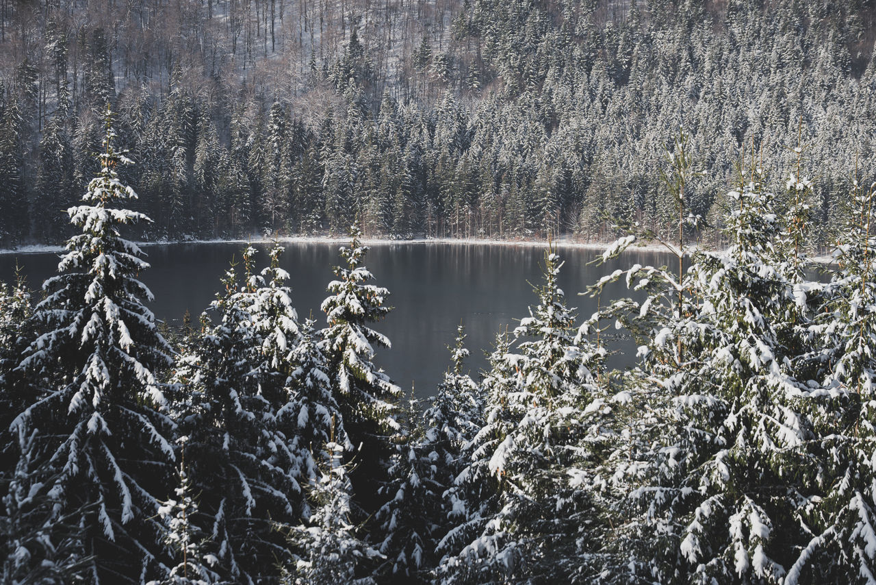 Backgrounds Beauty In Nature Crater Lake Day Evergreen Forest Forest Photography Green Lake National Park Nature Nature Nature_collection No People Outdoors Pine Tree Romania Scenics Sky Tranquil Scene Tranquility Tree Trees View Water