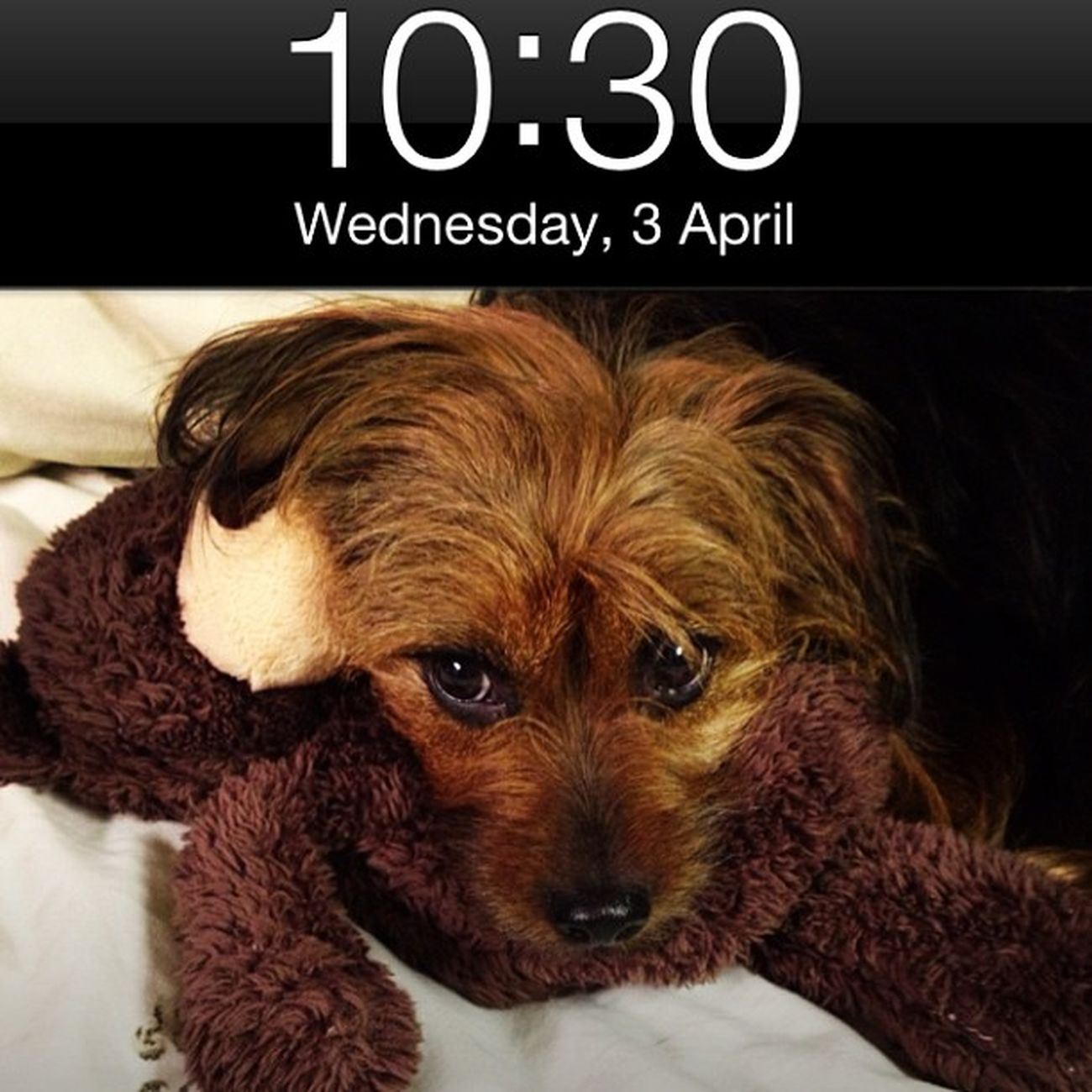 Aprilphotoaday Lockscreen
