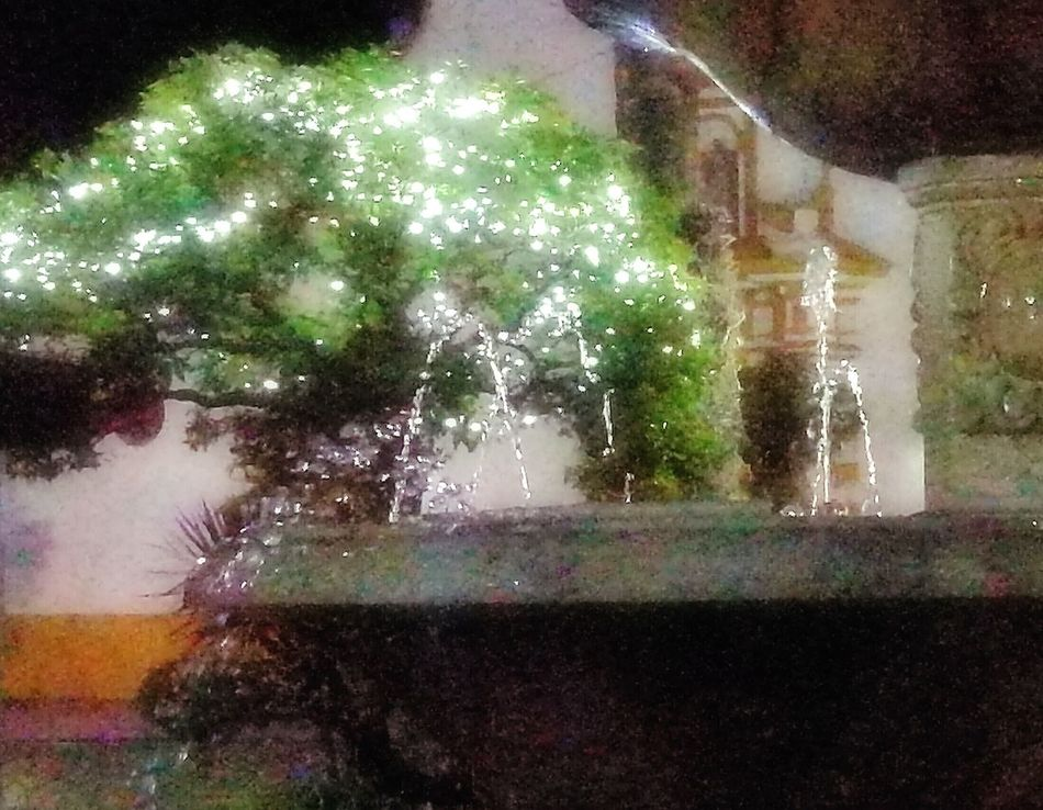 Wet Tree Water Motion Night Illuminated Fuente Agua Chorros Effects Illusion Color Fountain