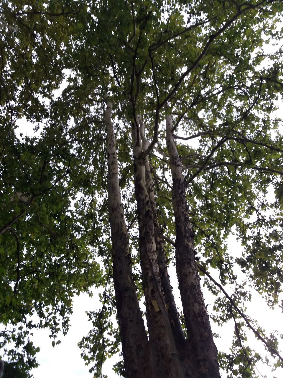 tree, low angle view, nature, growth, branch, day, outdoors, no people, tree trunk, tranquility, beauty in nature, forest, sky