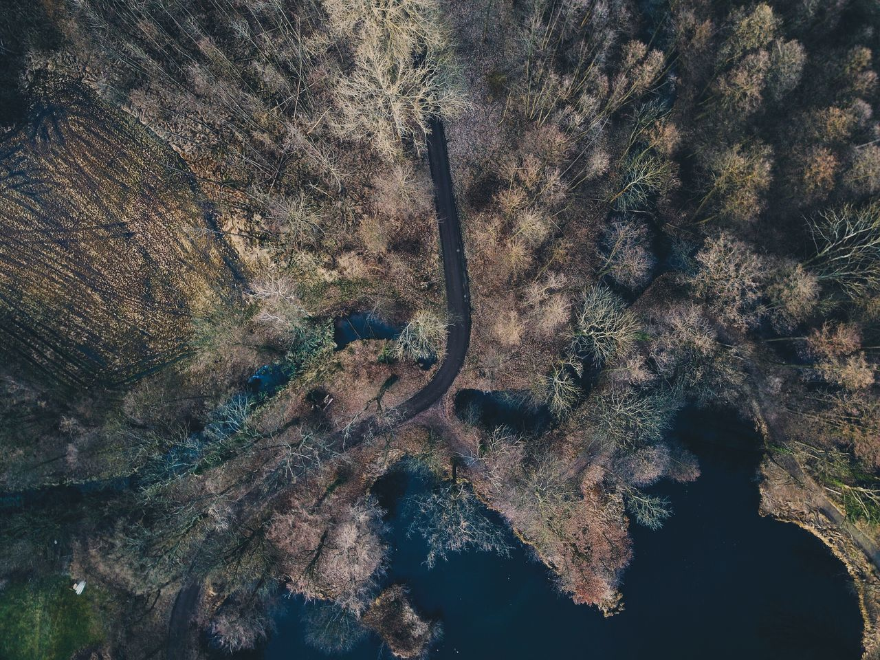 Flying High Dji Mavic Pro Nature Tree Beauty In Nature Forest