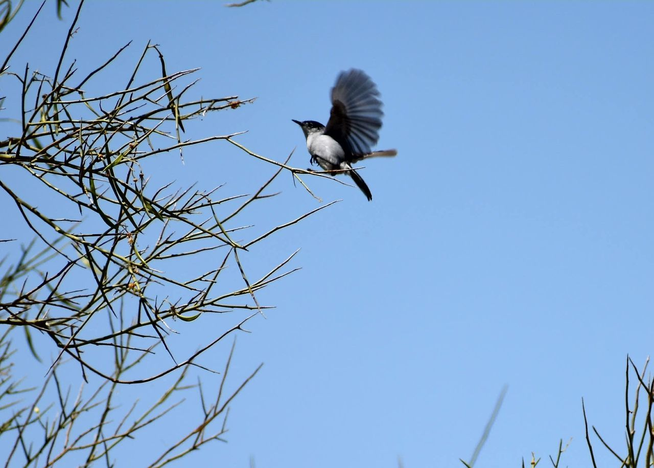 Bird Animal Wildlife Blue Animals In The Wild Clear Sky Low Angle View Flying Day Sky One Animal Outdoors Stork Tree Branch Nature No People Beauty In Nature Animal Themes Bird Of Prey