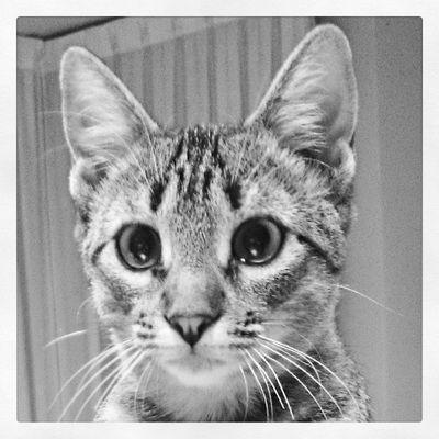 Deja de currar... Hazme caso!!! Itzi Igerscats XperiaZ1 Animals