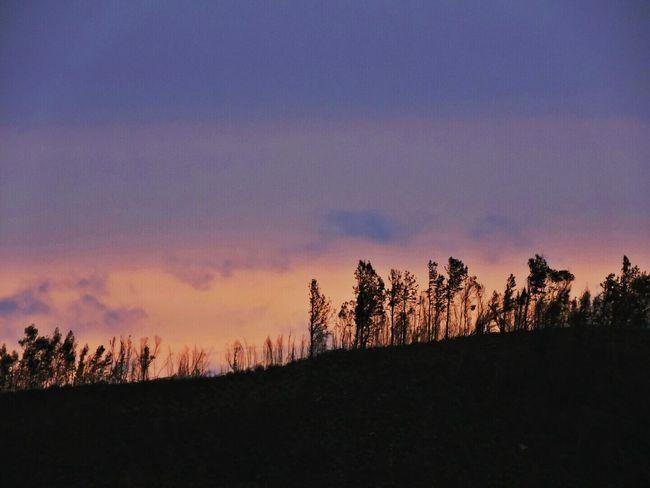 Sun Set Colorful Beautiful Nature Kolukkumalai Peak Taking Photos Trees Trees And Sky Nice View Spotted In Munnar