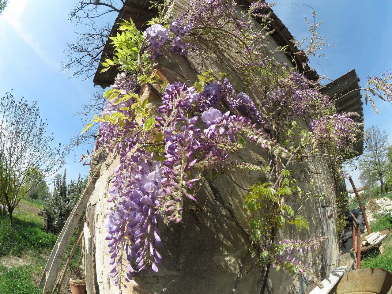 Growth Tree Sky Nature Plant Flower Sunlight Outdoors Beauty In Nature Day No People Close-up Fragility Freshness Glicine Glicineinfiore Fisheye