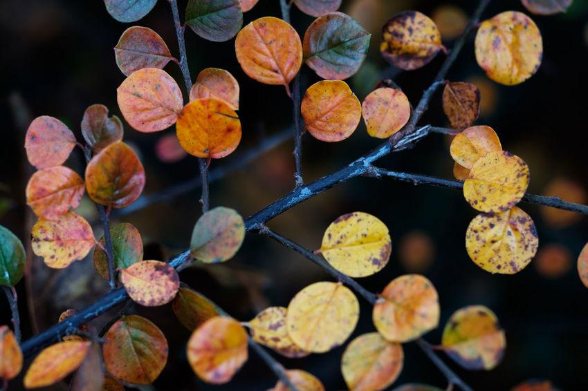 Maximum Closeness Showcase: November Zeiss60mm Tenebrio.photos Macro Fake Bokeh Beautifully Organized