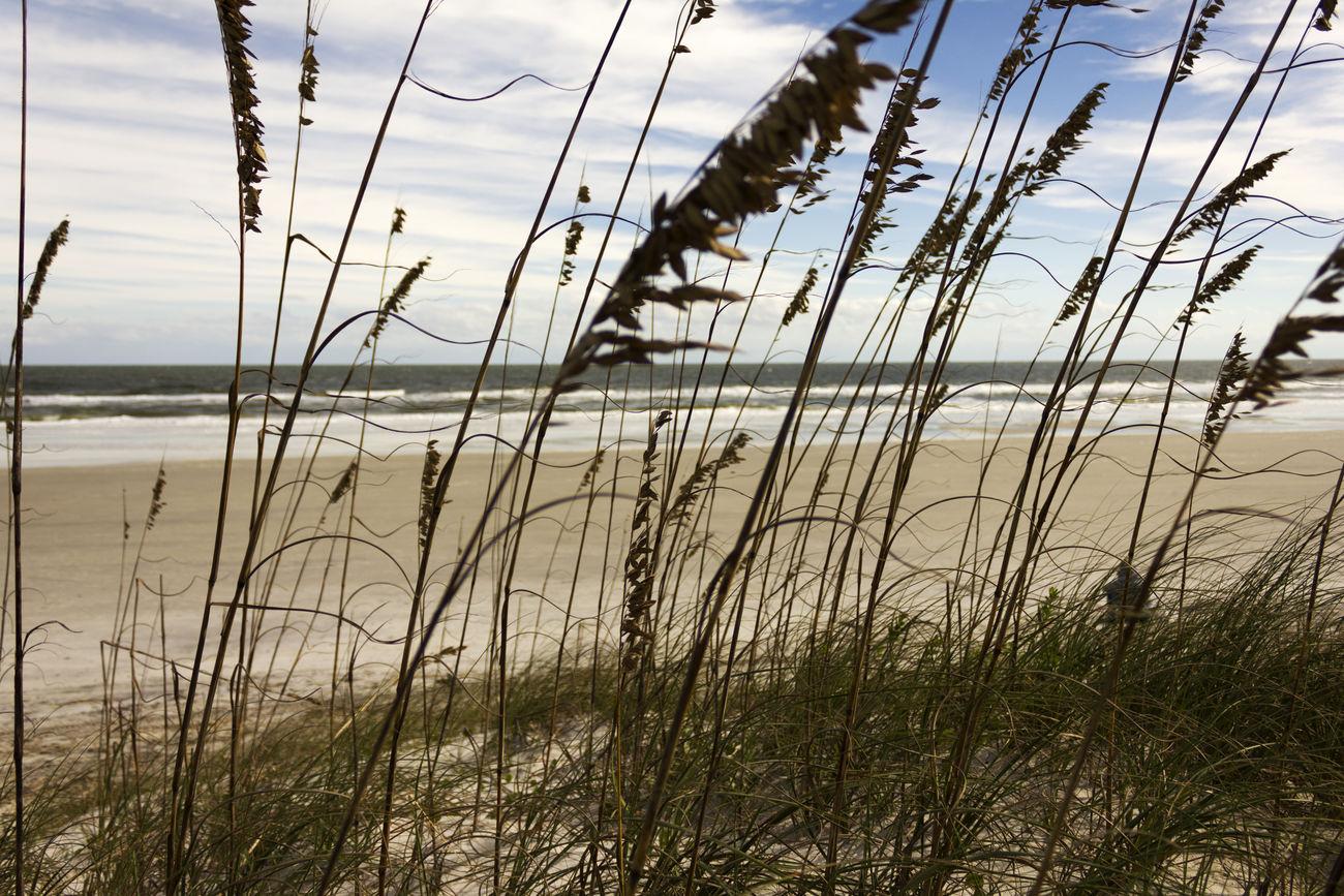 At The Beach Beach Dunes JacksonvilleFL No People Plant Reeds Wintertime