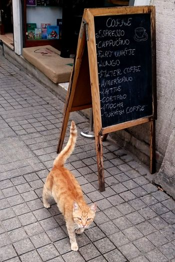 Cat Catoftheday Cats Cat♡ Cat Lovers Catsofinstagram Cats Of EyeEm Gatto Katzen Gato Cafe Board Menu List