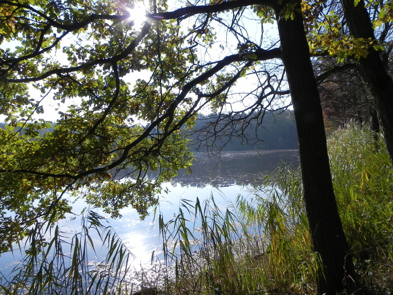 Beauty In Nature Branch Day Lake Landscape Nature No People Outdoors Reflection Scenics Sky Sun Sunbathing Sunlight Tranquility Tree Water