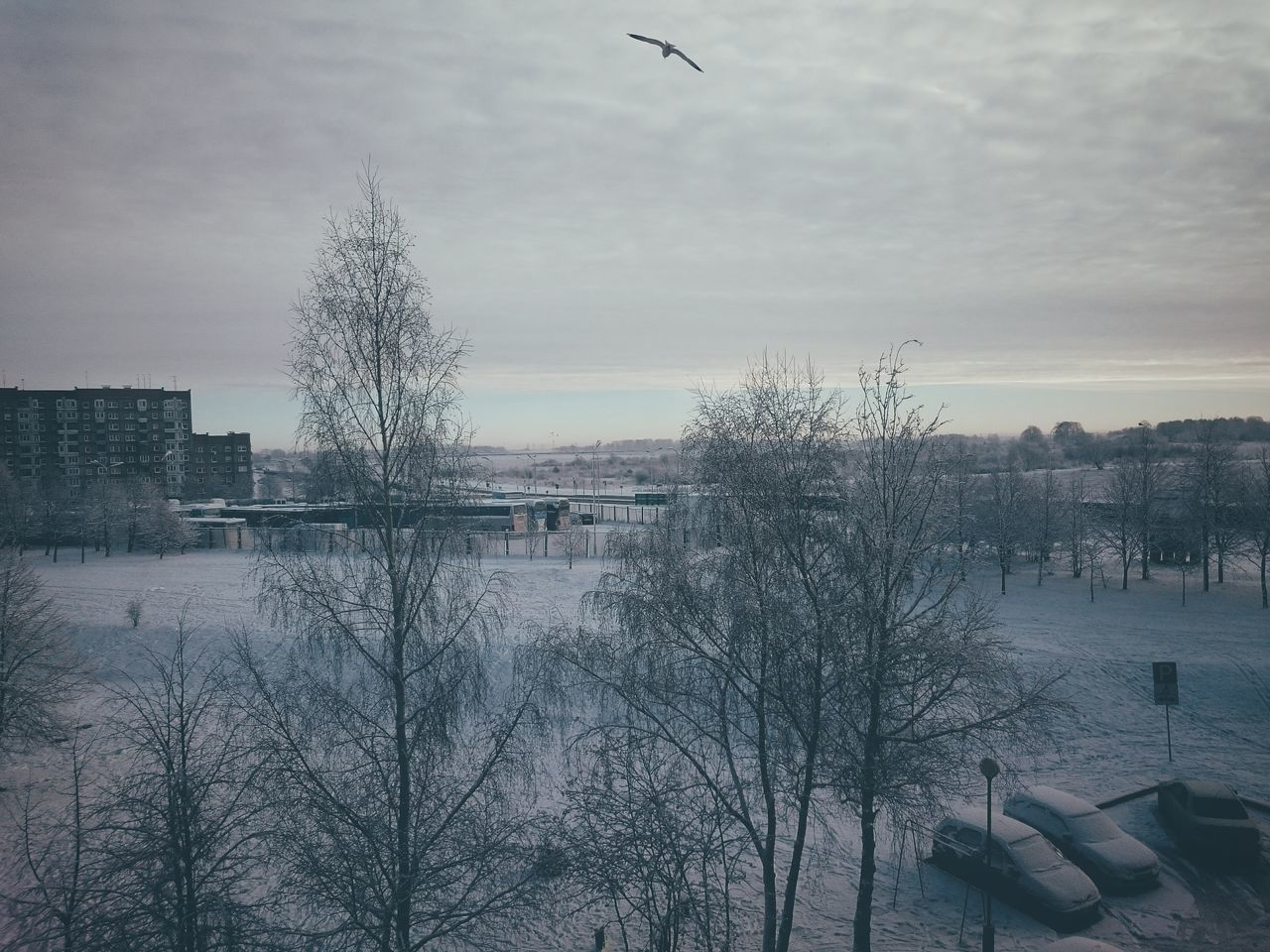 XPERIA Xperiaphotography Xmas First Snow Morning View VSCO Snow Day Bird In Sky Flying Bird Sky Animal Themes Cloud - Sky Sunset Outdoors Nature Flock Of Birds No People Large Group Of Animals Day Cityscape