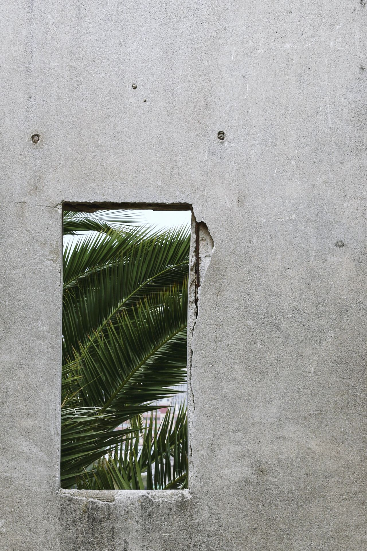 no people Architecture day close-up concrete concrete wall Palm tree Palm Leaf palm trees green leaves greenery Green Green Green! Green color