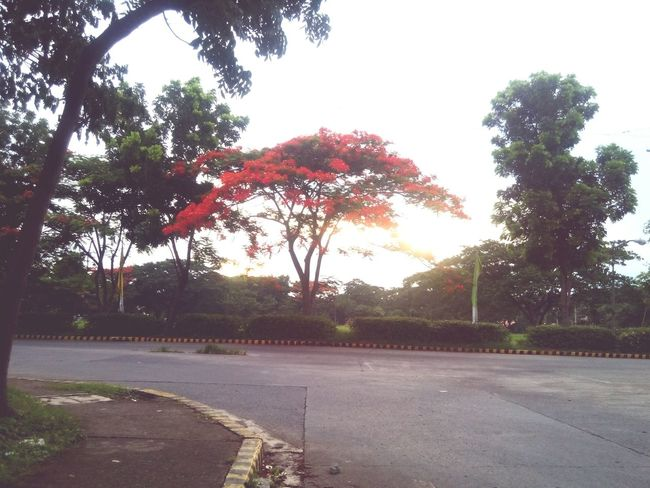 I pulled over to take this quick shot xD Sunset Flame Tree Relaxing Mobilephotography Nice