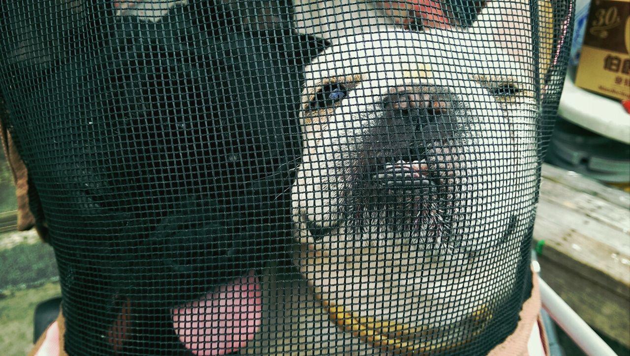 Beautiful stock photos of bulldog, Animal Themes, Close-Up, Contrast, Cruel