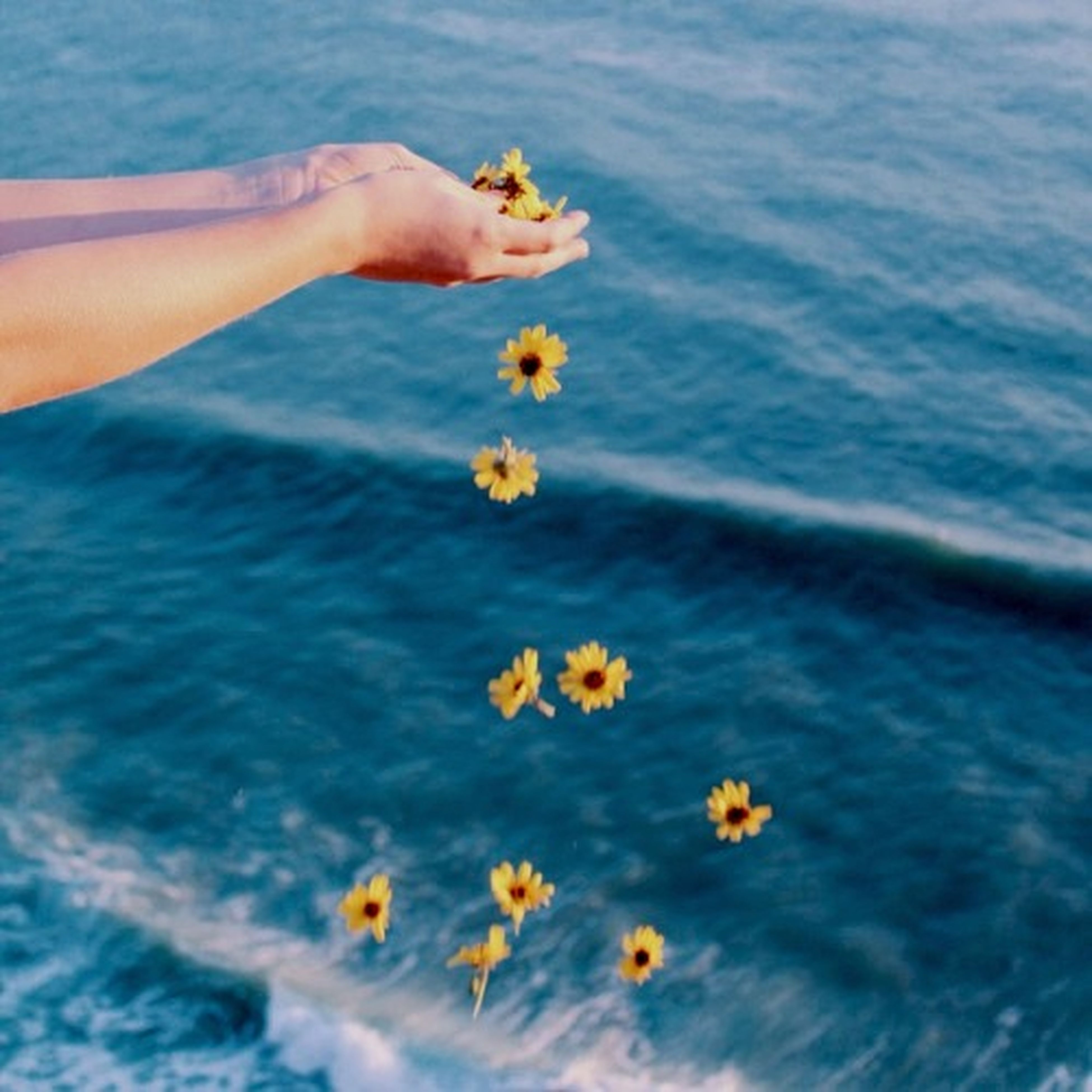 person, water, blue, flower, lifestyles, leisure activity, freshness, part of, yellow, sea, beauty in nature, holding, fragility, unrecognizable person, nature, cropped, petal