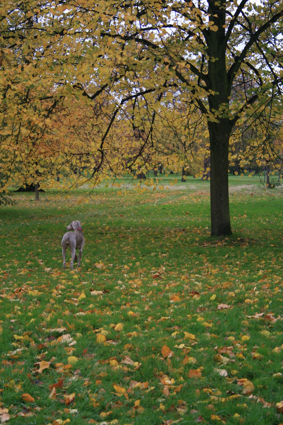 Autumn Beauty In Nature Dog Walker Domestic Animals Landscape Outdoors Tree London