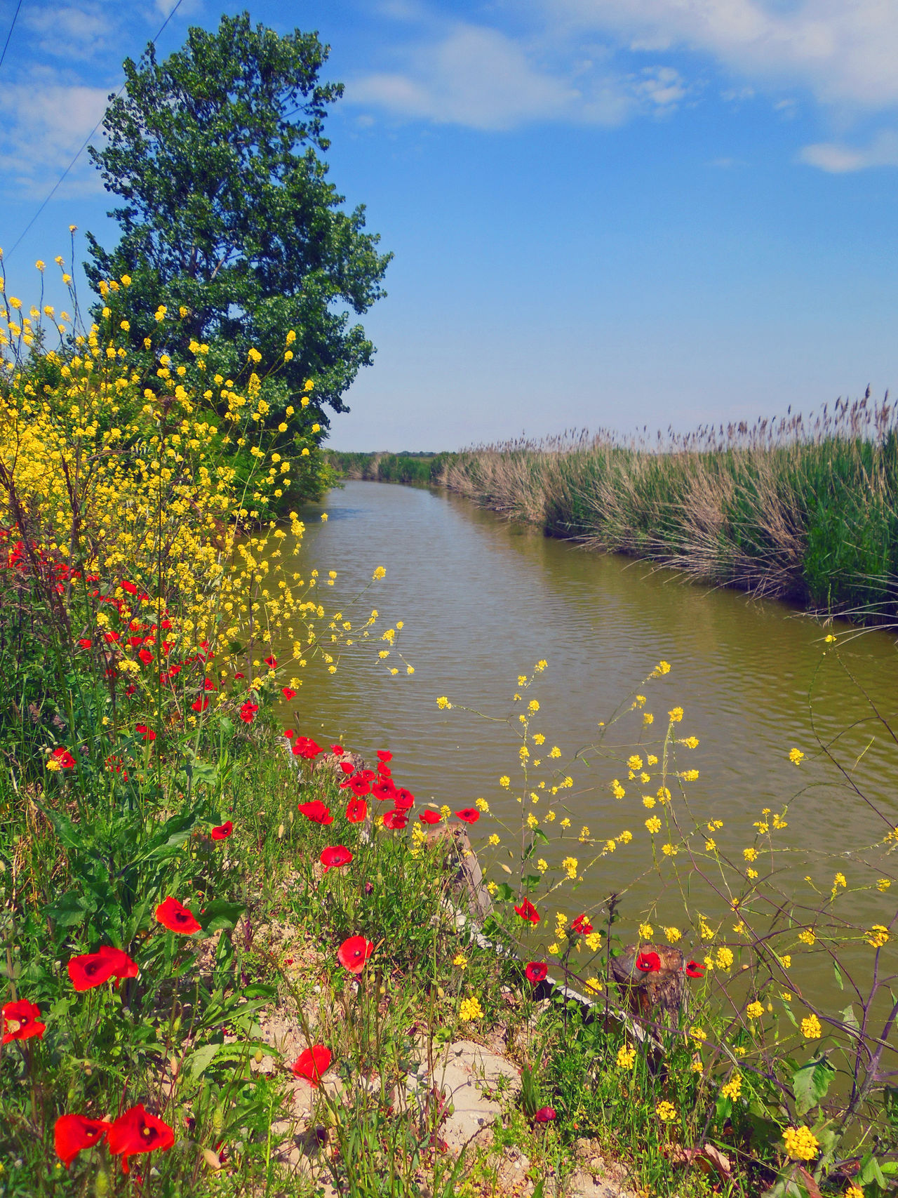Beauty In Nature Blue Channel Flower France Grass Growth Horizon Over Water Multi Colored Nature Papaver Plant Poppy Poppy Flowers Red Flower Riverscape Sky Tranquil Scene Travel Destinations Traveling Travelling Tree Water Yellow Flower
