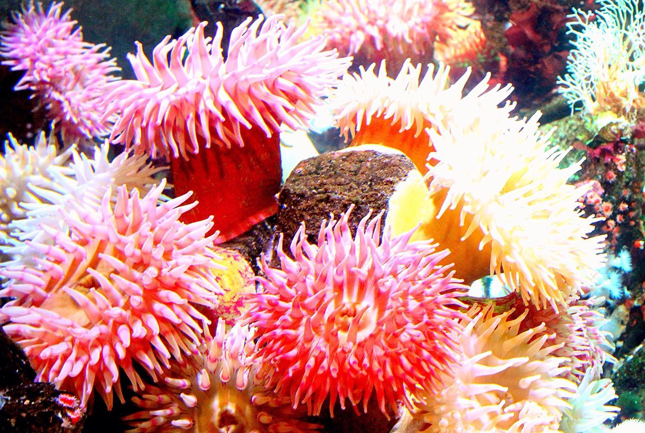 At the Vancouver Aquarium Sea Plant Sea Flower Underwater Indoors  Random