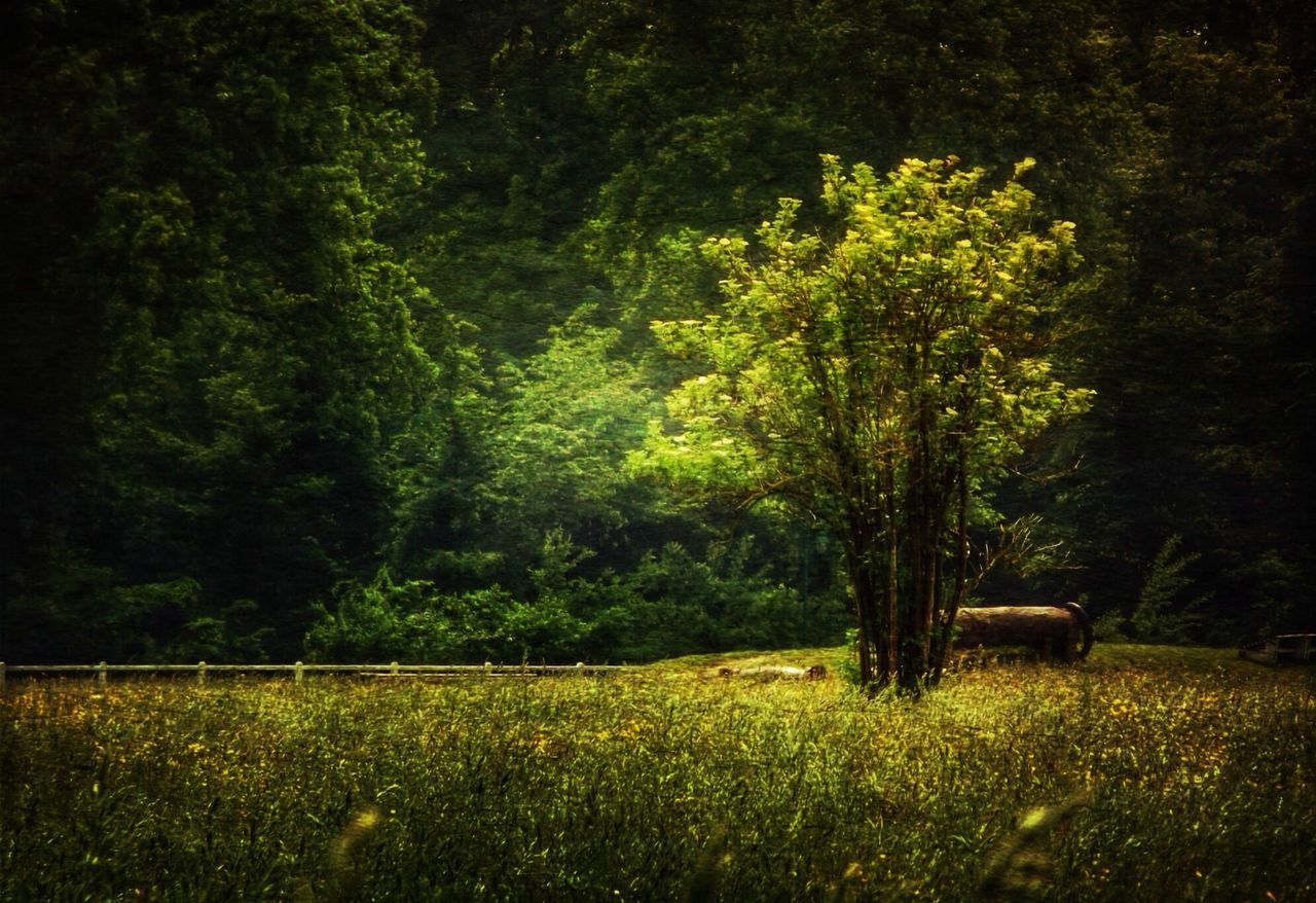 I TANK I Exceptional Photographs Stenkas Colored World Stenkas Secret Lands Stenka And Friends I Forest Trees Tree Tank Green I EyeEm EyeEm Nature Lover Eye4photography  EyeEm Gallery EyeEm Best Shots I Hello World Check This Out Taking Photos