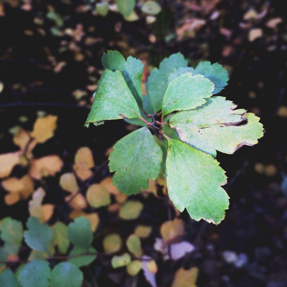 🌿🌾 green Fall Night Nature