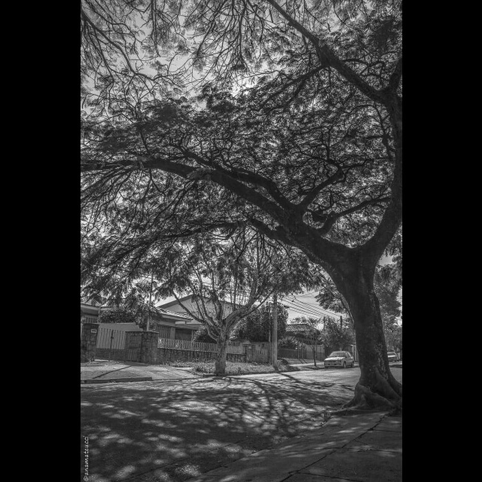 Street Life LoveSP Photowalk LoveBW Streetphoto Streetphotography_bw Nature_collection Tree_collection  For The Love Of Trees ~