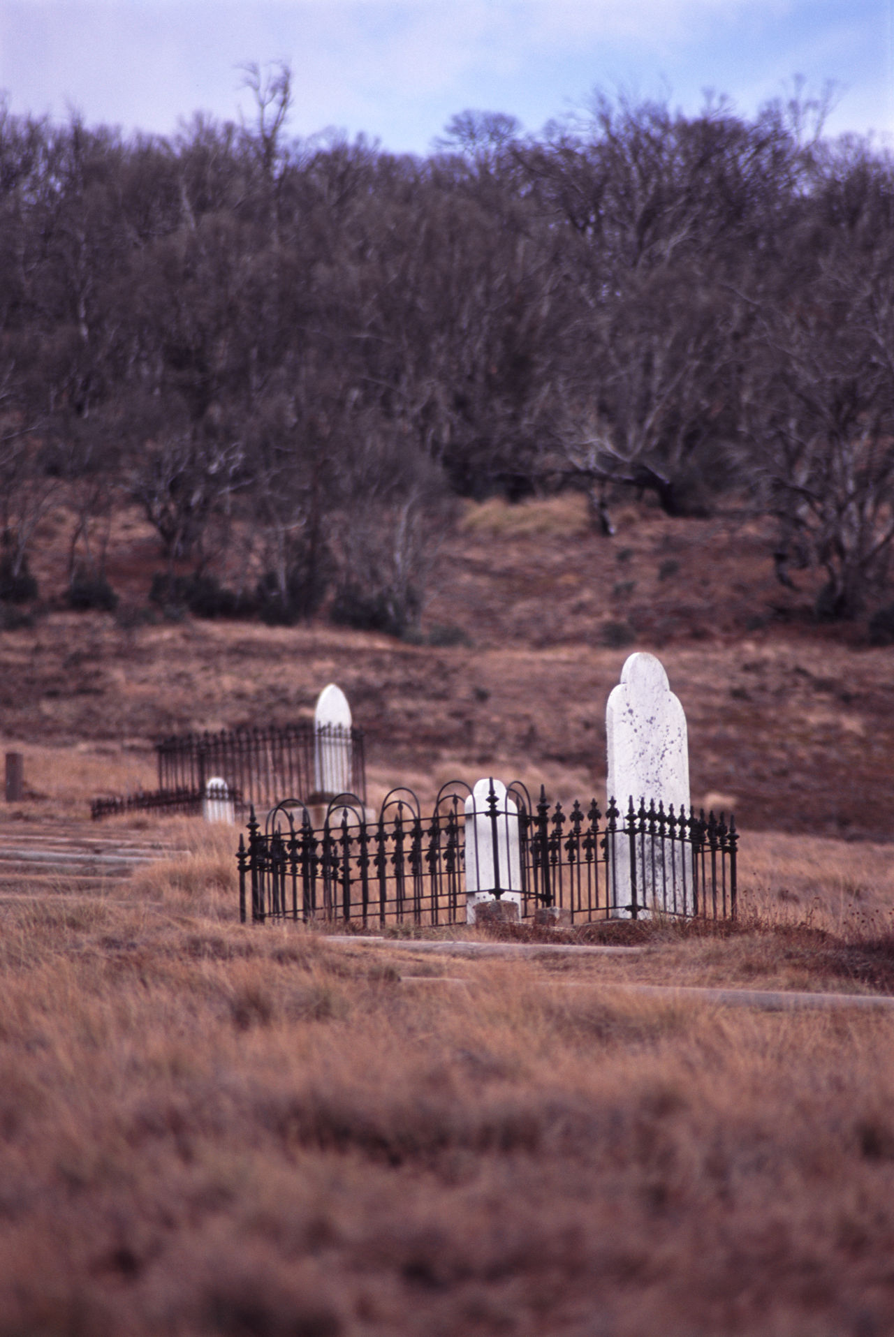 graves of gold miners, snowy mountains, victoria. Australia Burial Cemetery Chinese Chinese Thombstone Dead Distant Grass Grave Graves Headstone Memorial Victoria