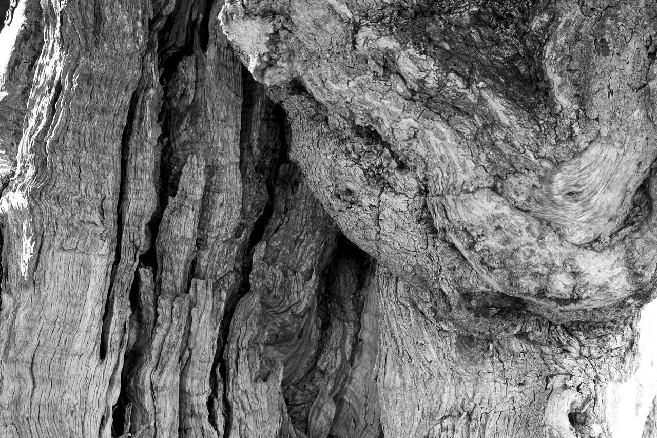 Background Backgrounds Bark Black & White Black And White Blackandwhite Blackandwhite Photography Close-up Cracked Day Full Frame Knotted Wood Nature No People Olive Tree Outdoors Pattern Rough Textured  Tree Tree Tree Trunk Tree Trunk Wood - Material Wood Grain