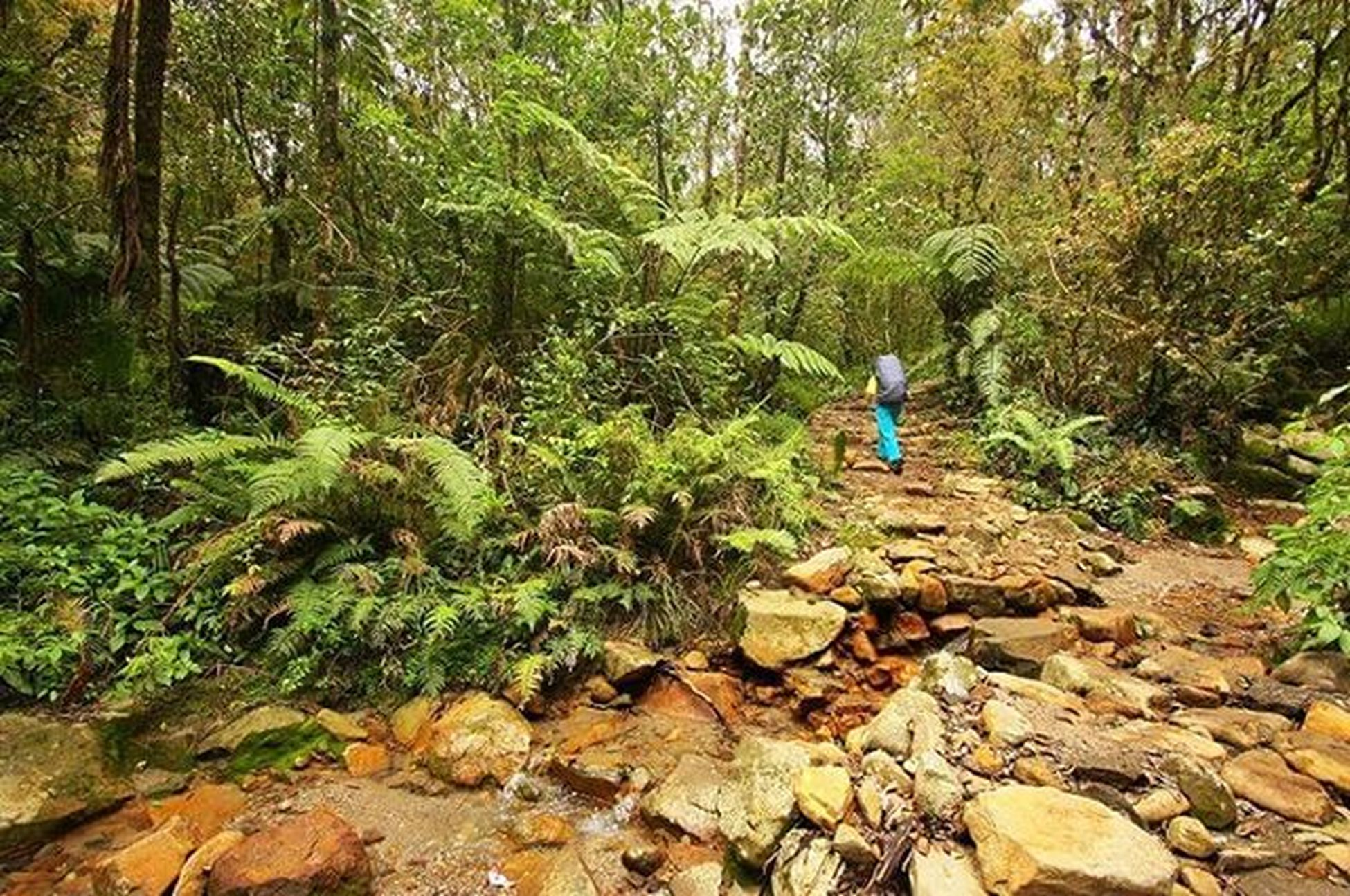 Menyesap hijau Lombafototnggp2016 Gunung Gede Pangrango