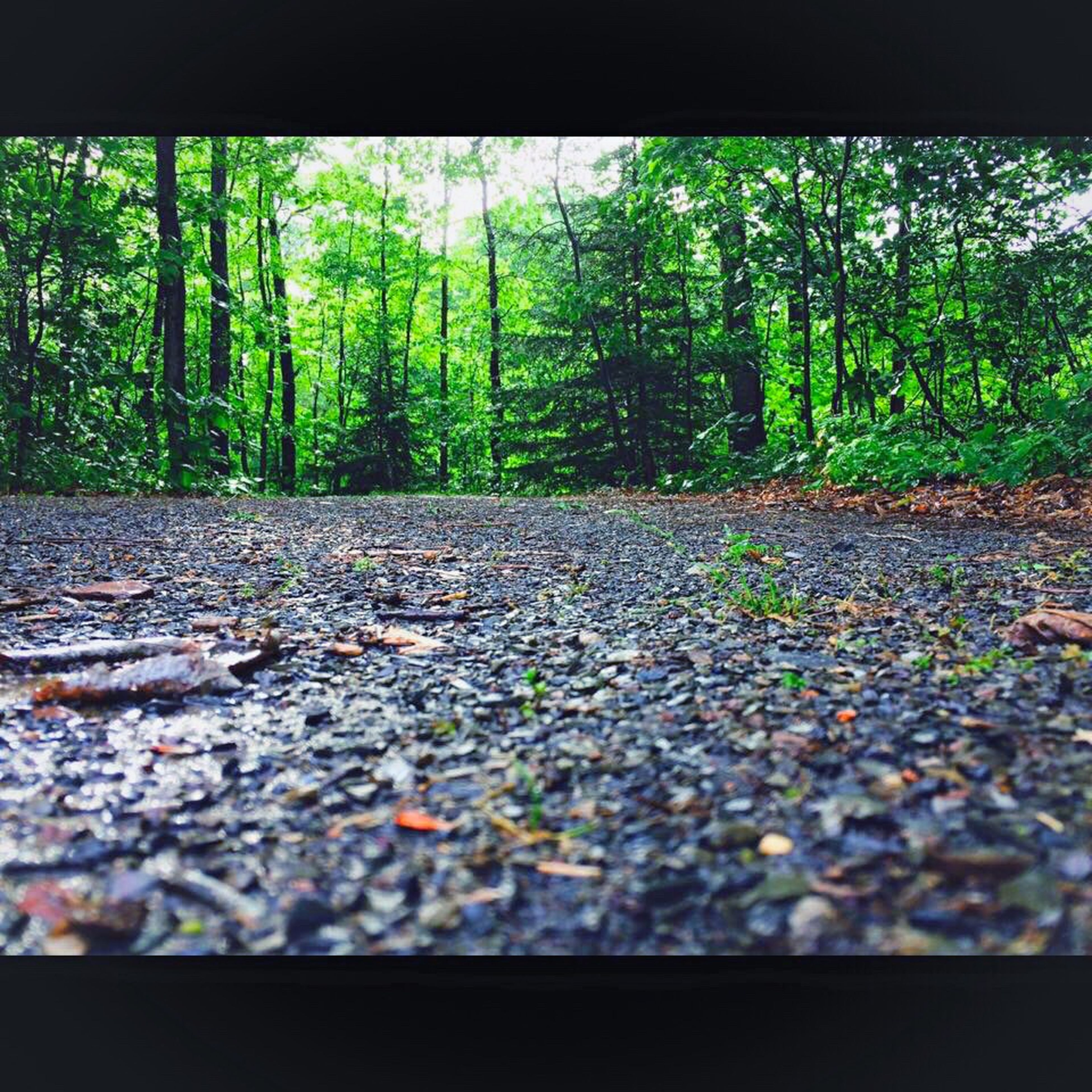tree, the way forward, surface level, tranquility, growth, diminishing perspective, transportation, nature, transfer print, auto post production filter, forest, vanishing point, leaf, selective focus, road, tranquil scene, day, plant, outdoors, no people