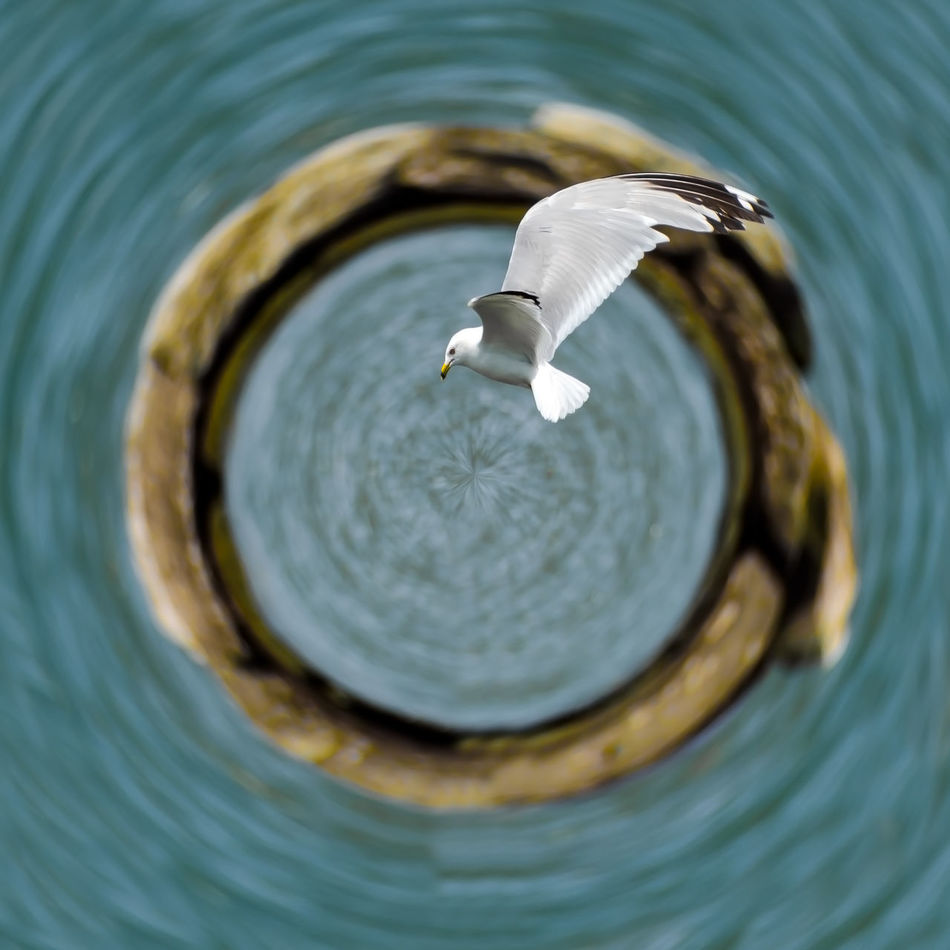 Gull flying over Lake Erie. Hanging Out Check This Out Tiny Planet Tinyplanets Lake Erie Cleveland Ohio Tinyplanetfx
