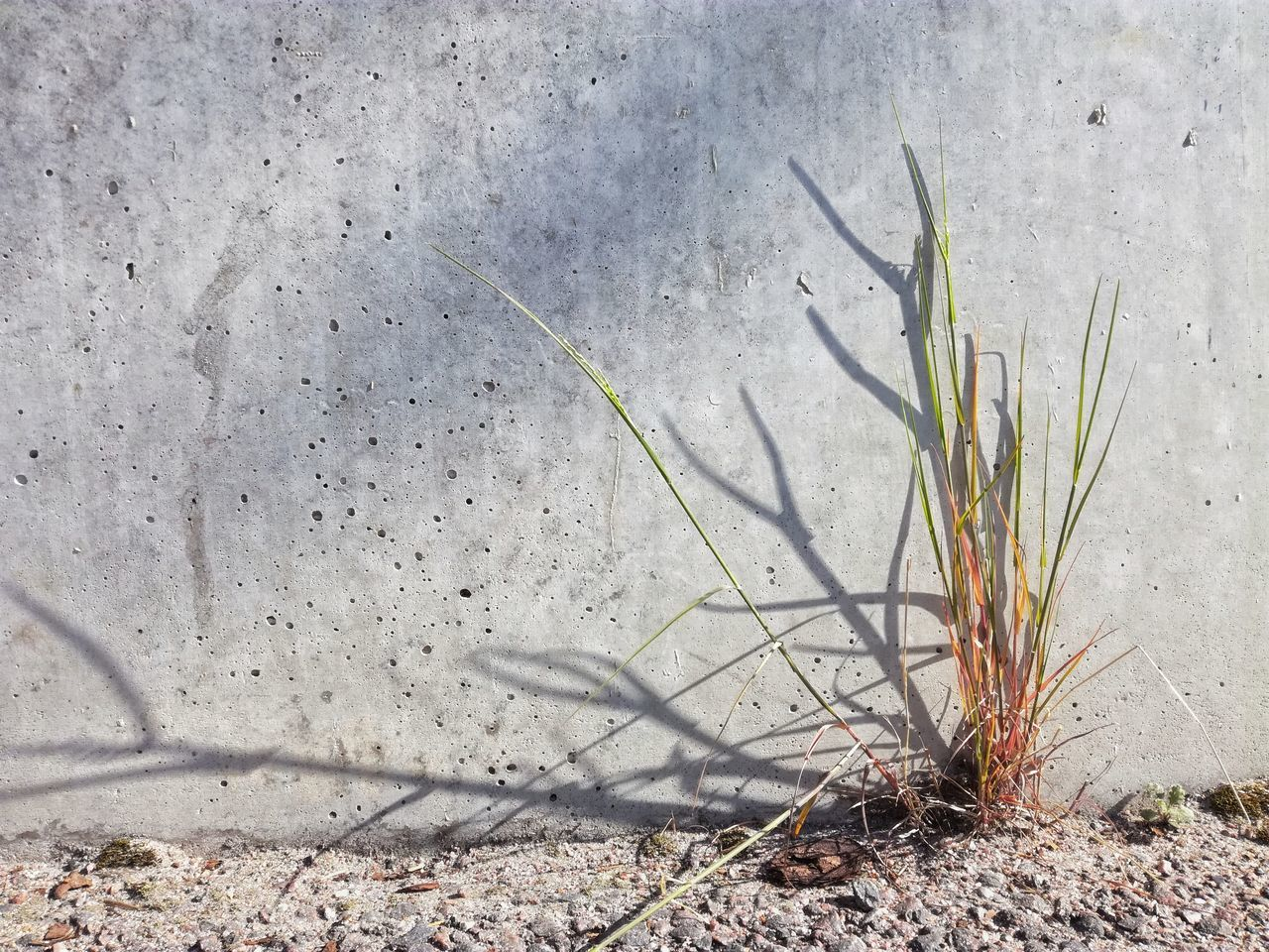 Wall Beton Day Shadow Outdoors No People Sunlight Plant Growth Nature Close-up Background Growing Urban Texture