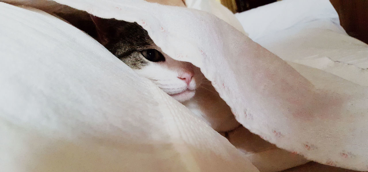 #MollyTheWelshCat Animal Themes Cat Close-up Domestic Animals Eye Furry Mammal Pets Sneeky