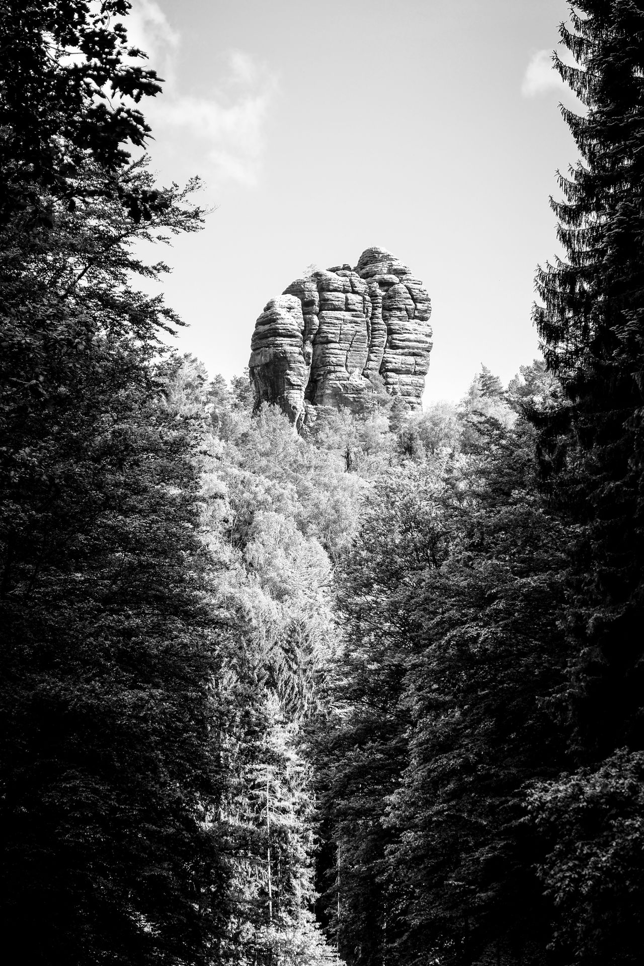 Beauty In Nature Check This Out Climbing Climbing A Mountain Exceptional Photographs Eye4black&white  Eye4photography  EyeEm Masterclass EyeEm Nature Lover Home In The Woods Isolation Monochromatic Monochrome Nature Outdoors Rathen Rock Sandstone Saxon Switzerland Single Sächsische Schweiz Sächsischeschweiz The Great Outdoors - 2016 EyeEm Awards The Great Outdoors With Adobe