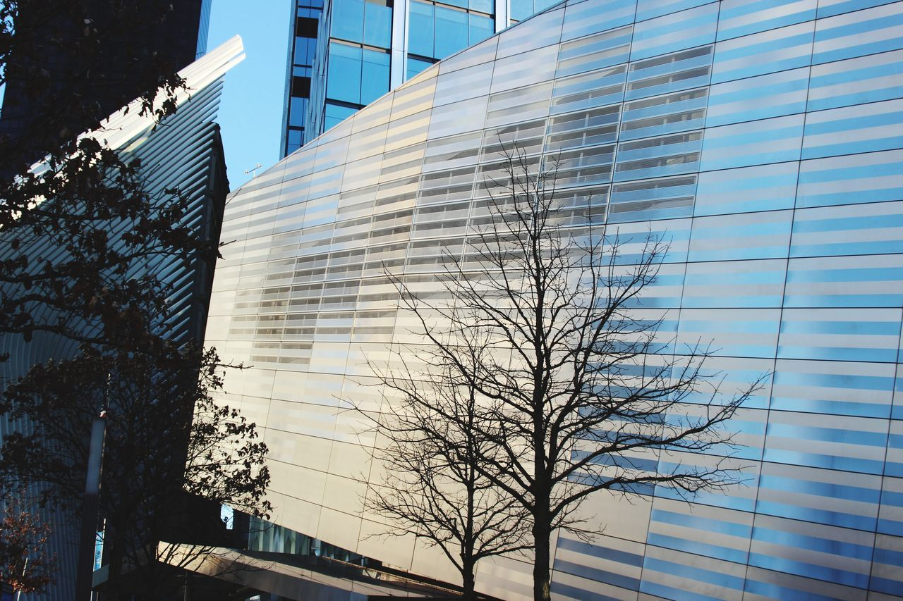 architecture, building exterior, built structure, modern, skyscraper, tree, city, sky, outdoors, low angle view, no people, day, growth, bare tree, office park