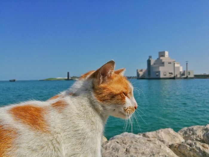 Sea Water One Animal Pets Beach Clear Sky Mammal Domestic Animals Sky Outdoors One Person Close-up Day People Adults Only Adult One Man Only Cats Cats 🐱 Cat♡ Cat Lovers Cats Of EyeEm