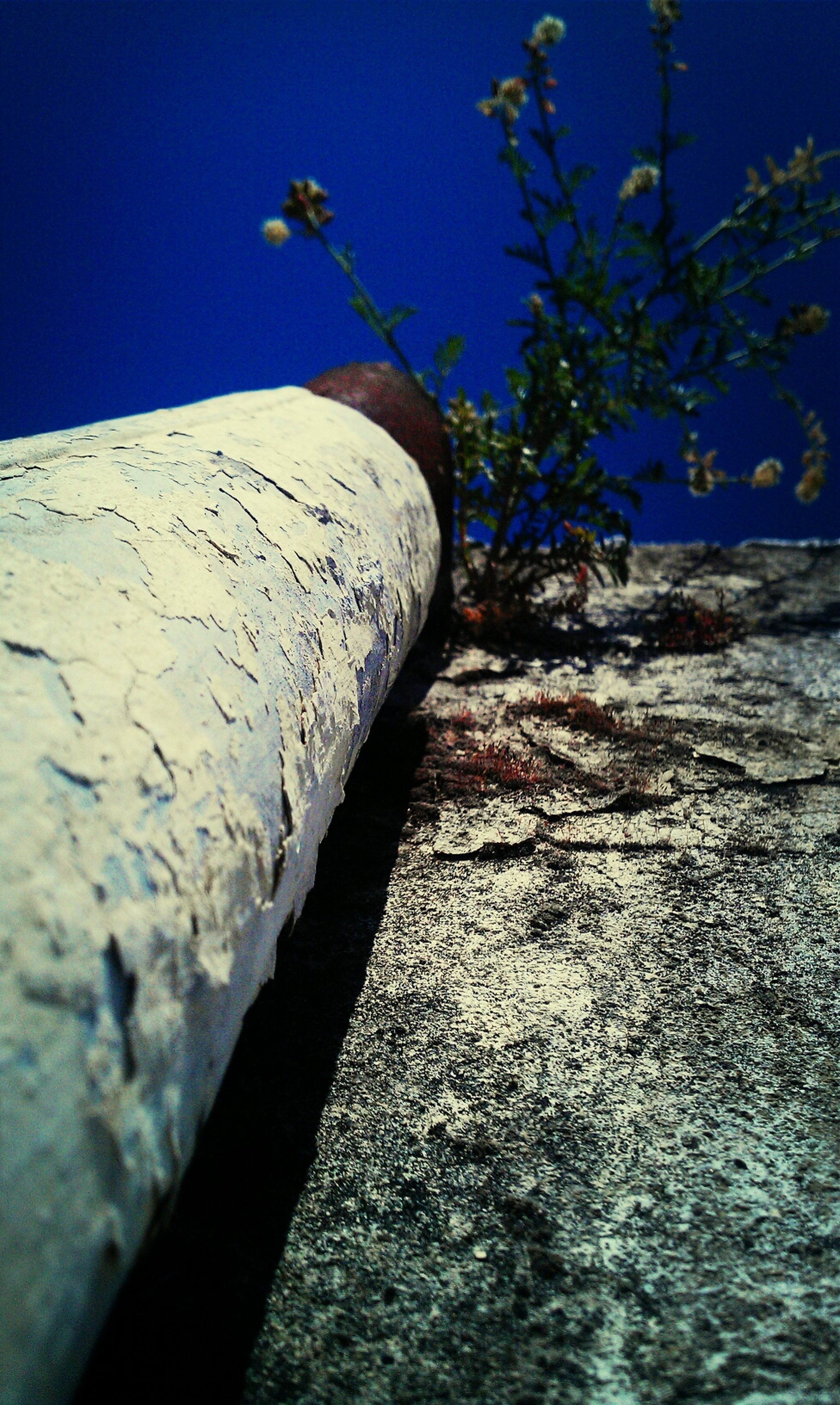 blue, close-up, clear sky, built structure, sunlight, day, no people, outdoors, abandoned, low angle view, metal, architecture, damaged, old, sky, shadow, nature, wood - material, wall - building feature, weathered