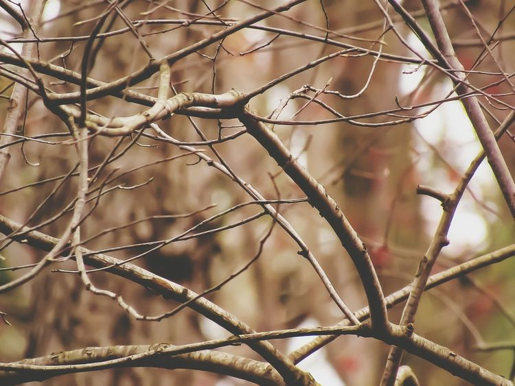 Nature Close-up Outdoors No People Winter Day Tree Plant Branch Cold Temperature Beauty In Nature Tree Tree Branch  Kent Ohio