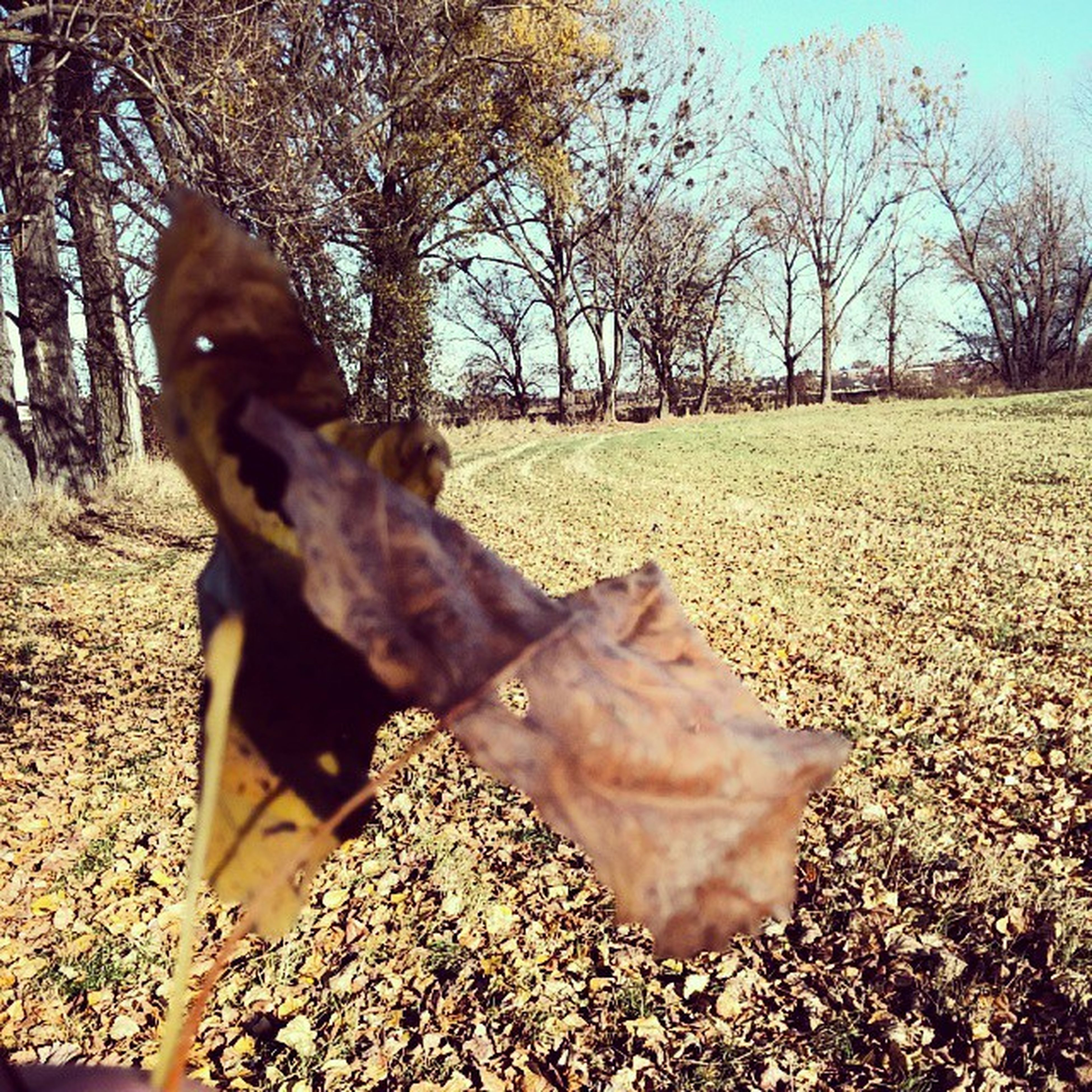 tree, autumn, leaf, tranquility, nature, dry, tranquil scene, change, fallen, season, beauty in nature, field, landscape, leaves, sunlight, scenics, tree trunk, growth, branch, day