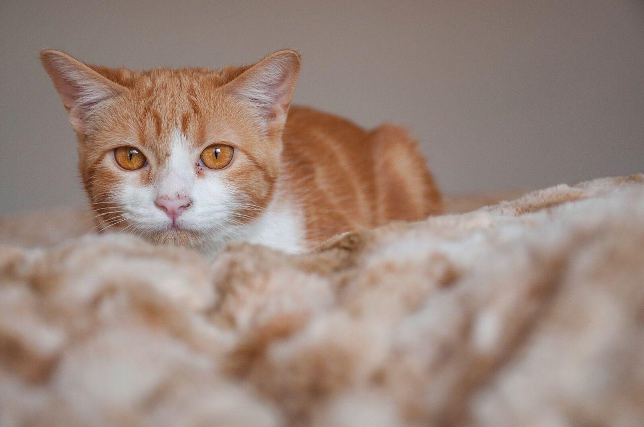 Hunting Domestic Cat Pets Feline Hunting Caza Cazando Gato Gatita