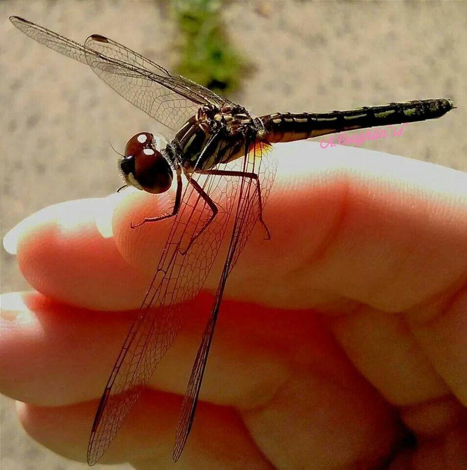 Dragonfly Eye Em Nature Lover Macro_bugs Love Bugs