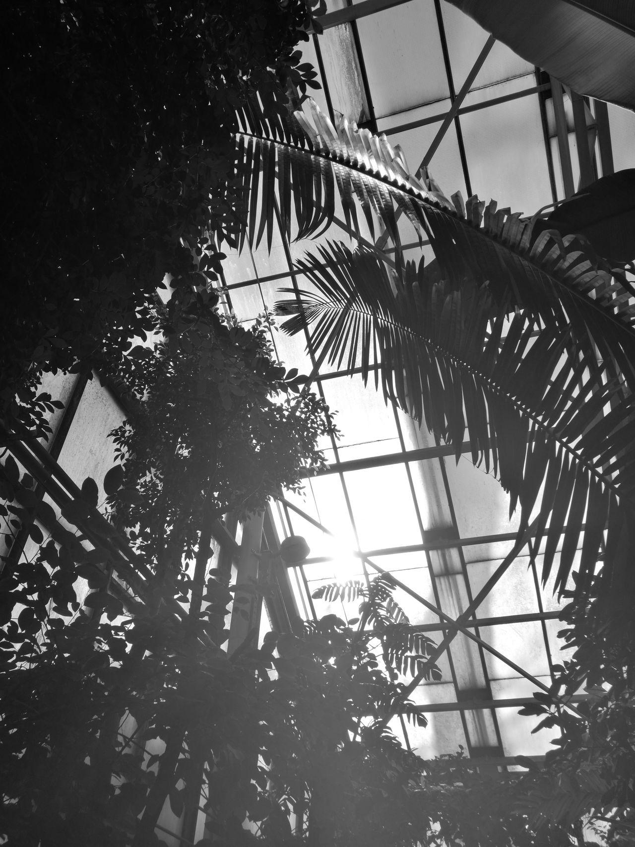 Windows Nature_collection No People Enjoying Nature Beauty In Nature ShadowsContur Arboretum Blackandwhite Contur
