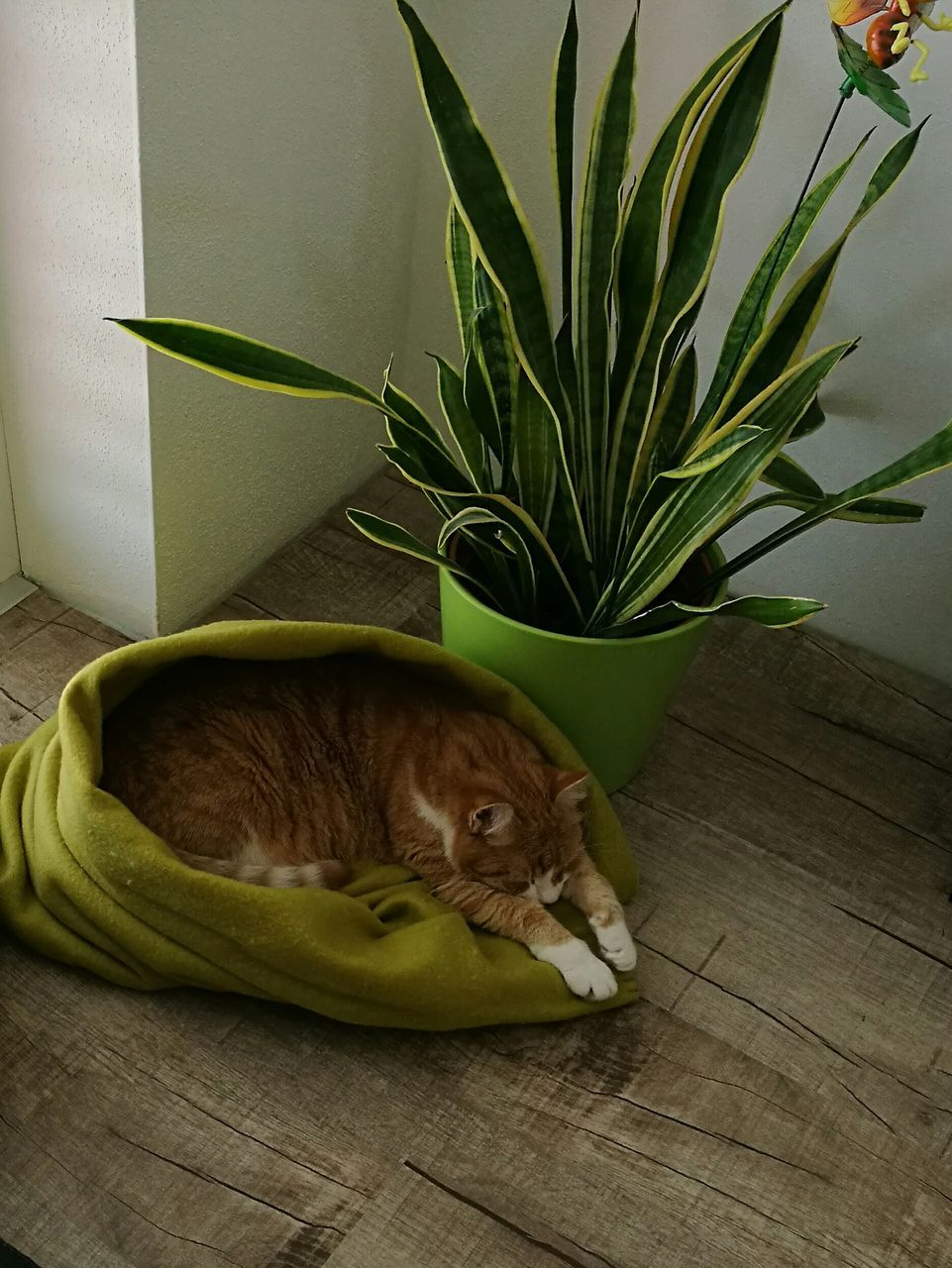 domestic cat, indoors, one animal, pets, animal themes, domestic animals, feline, no people, mammal, day
