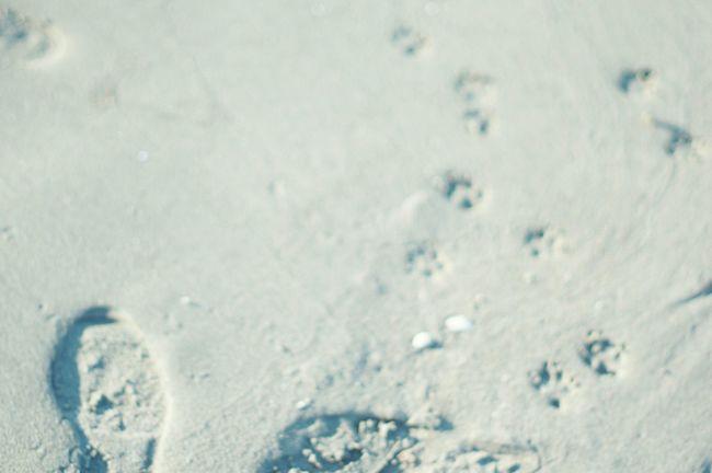 White Album WhiteCollection Seaside Oldlens EyeEm Nature Lover