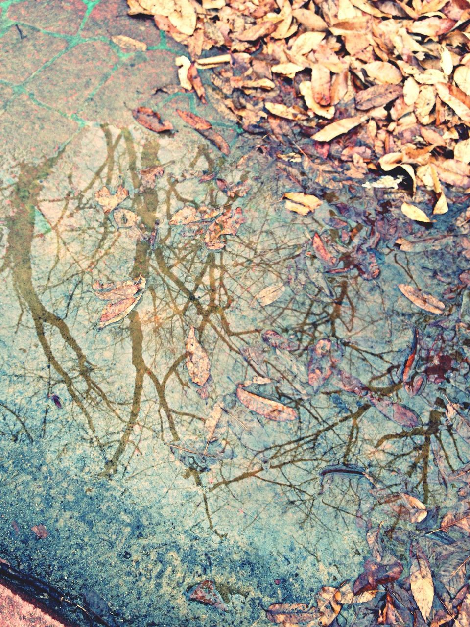 Reflection Of Bare Trees In Puddle